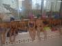 Předvánoční plavání